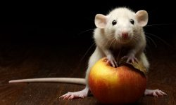 this-apple-is-mine